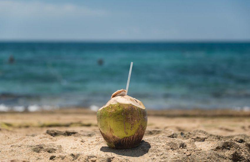 코코넛 오일 - 해변의 코코넛