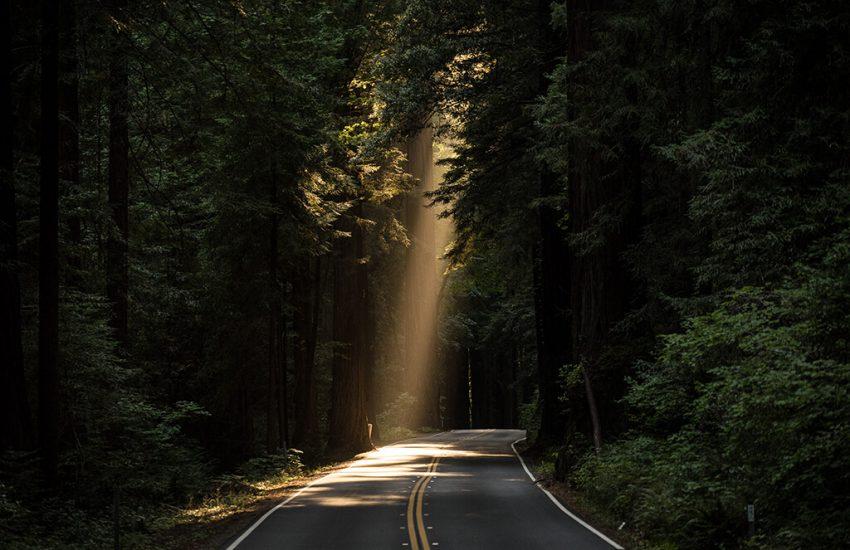 공황장애 극복-어두운 숲에 한줄기의 빛을 표현한 사진
